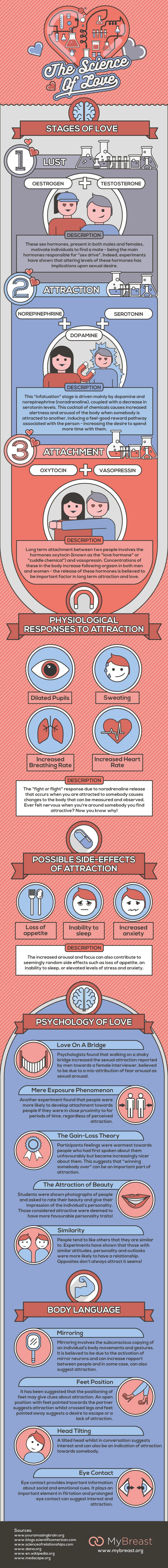 The Science of Love InfographicThe Science of Love Infographic