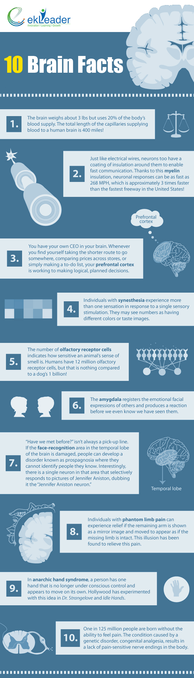 Ten Interesting Brain Facts Infographic